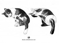Cat's shape n. 13